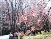 悠遊台中:武陵農場櫻花季 2017