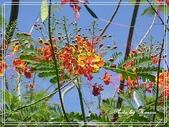 拈花惹草:黃蝴蝶