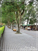 悠遊雲林:古坑綠色隧道
