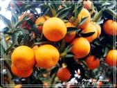 悠遊桃園:橘祥如意。十犬十美 2018